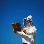 by: CHRISTOPHER ONSTOTT - Beekeeper Damian Magista transfers a new hive of bees to the rooftop of the New Seasons Market in Happy Valley. The Portland grocery chain is educating customers about the vital role that bees play in the food chain.