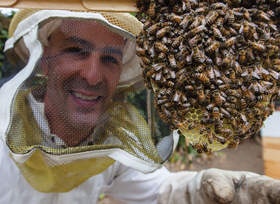 Paul Hekimian inspects a honeycomb forming in one of the hives behind his home