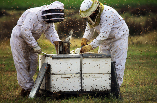 Jim Wilson/The New York Times Beekeepers with Big Sky Honey worked with hives used to pollinate almond groves in Bakersfield, Calif.