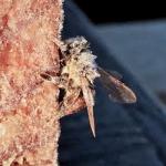 Winter Bees CU