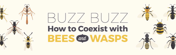 Coexist bees wasps