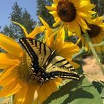 butterfly_plants