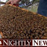 NBC bee shortage